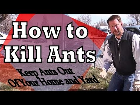 Get rid of ants how to kill ants and remove ants from your home get rid of ants how to kill ants and remove ants from your home and yard ccuart Choice Image