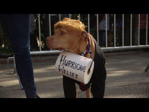 AFP: NY: Les chiens se font beaux pour la parade canine d'Halloween