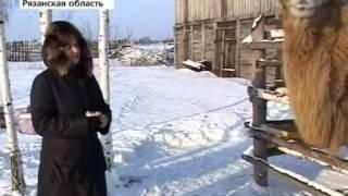 видео О музеях Рязанской области