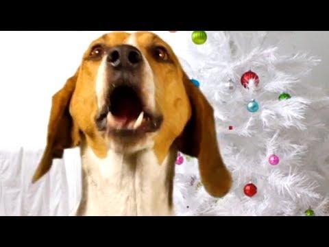 CANINE CHRISTMAS CAROLING
