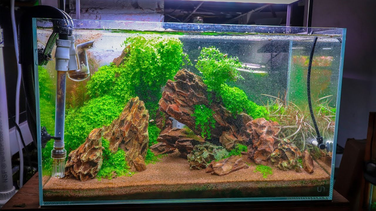 Top 5 Foreground Carpet Plants Aquascapers