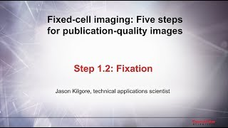 1.1 Culture conditions–Fixed cell imaging: 5 steps for publication-quality images