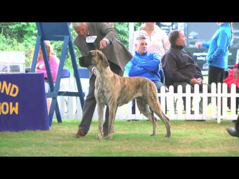 Richmond Dog Show 2016 - Working group FULL