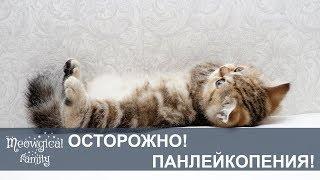 Адская ПАНЛЕЙКОПЕНИЯ: кошачья чумка