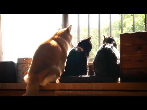3分間ひたすら癒される犬と猫の後ろ姿~警備隊の活動記録~ Home guard cats and dog
