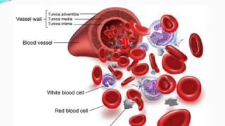 Erythrocyte Sedimentation Rate ( ESR)