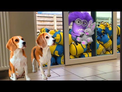 DOGS vs MINIONS IN REAL LIFE! Funny Dogs Louie & Marie