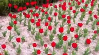 2012년 4월 김해문화의전당내 튜울립이 아름다워~~~