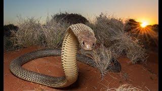 Австралия страна самых ядовитых змей