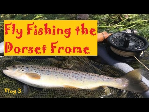 Fly Fishing The Dorset Frome - Dorchester Fishing Club (Vlog 3)