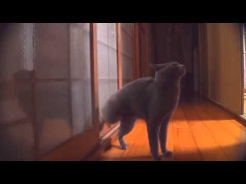 Юмор • прикольные истории, кошачий юмор