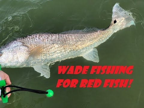 Wading for Red Fish in Galveston, Texas. Adversity At Its Best.