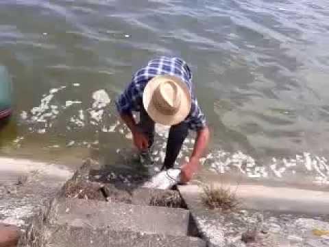 angeln am rhein bei stra burg youtube