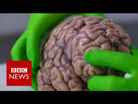 Up close with a human brain - BBC News