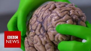 up close with a human brain bbc news
