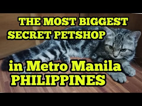 THE MOST BIGGEST SECRET PETSHOP IN METRO MANILA, PHILIPPINES. #33