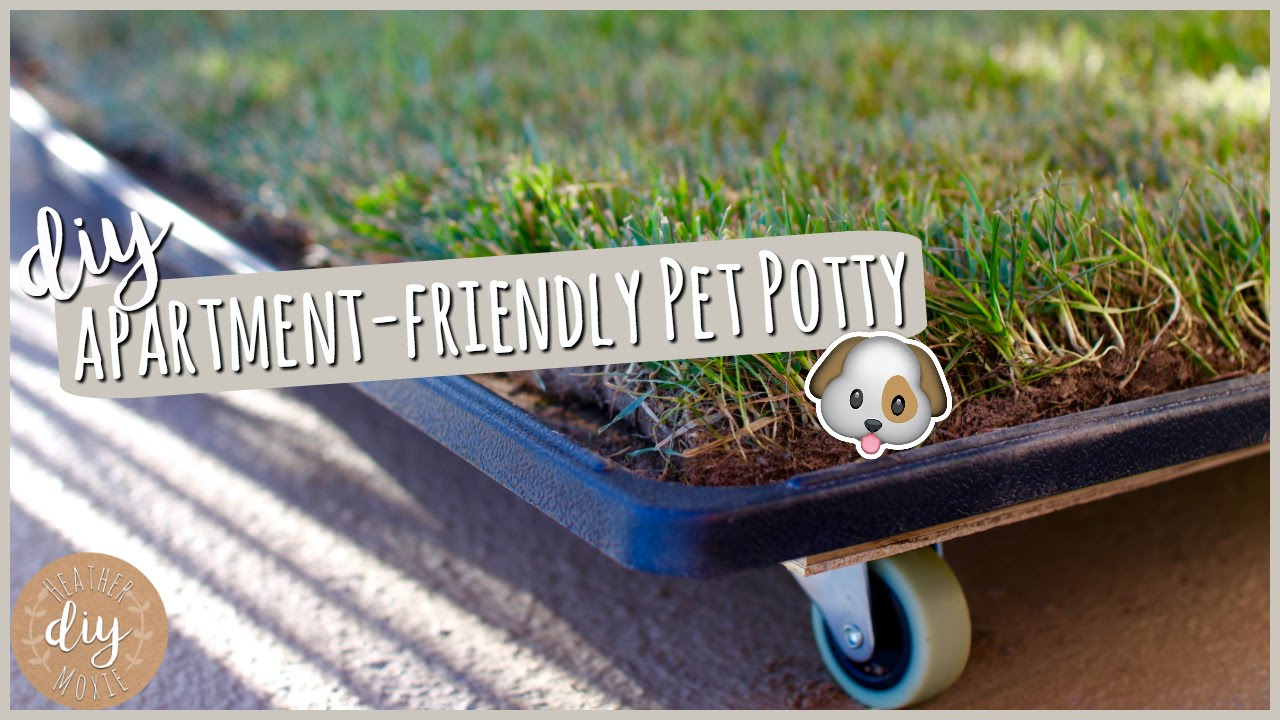 Diy Apartment Pet Potty Youtube