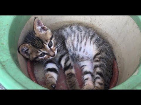 院子裡閒置了兩個花盆,貓:先讓我躺會兒