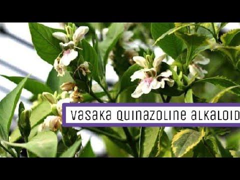 medical importance of Vasaka ||quinazoline alkaloid|| vasa || Adhatoda  vasica