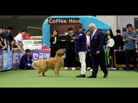 2017-07-01 David, ILSAN FCI International Dogshow