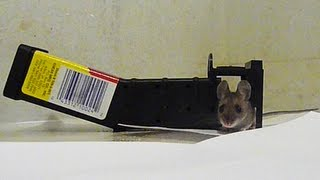 Kness Tip-trap Live Mouse Trap Full Test And Review