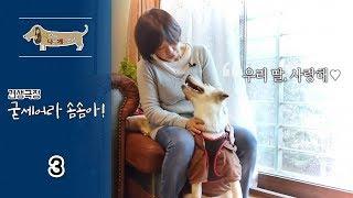 세상에 나쁜 개는 없다 - 견생극장, 굳세어라 솜솜아!_#003