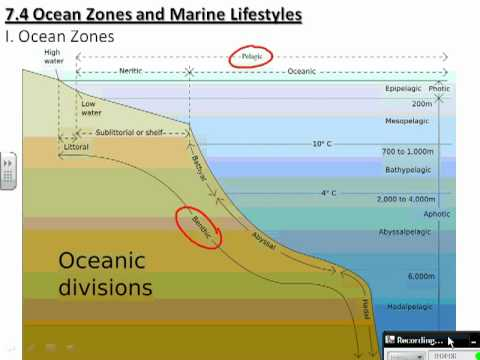 7 4_ocean_zones_lifestyles youtube ocean currents diagram diagram for ocean #36