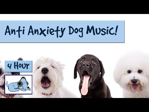 Separation Anxiety Curing Music! Music to Help Calm Down and Soothe Dogs with Separation Anxiety