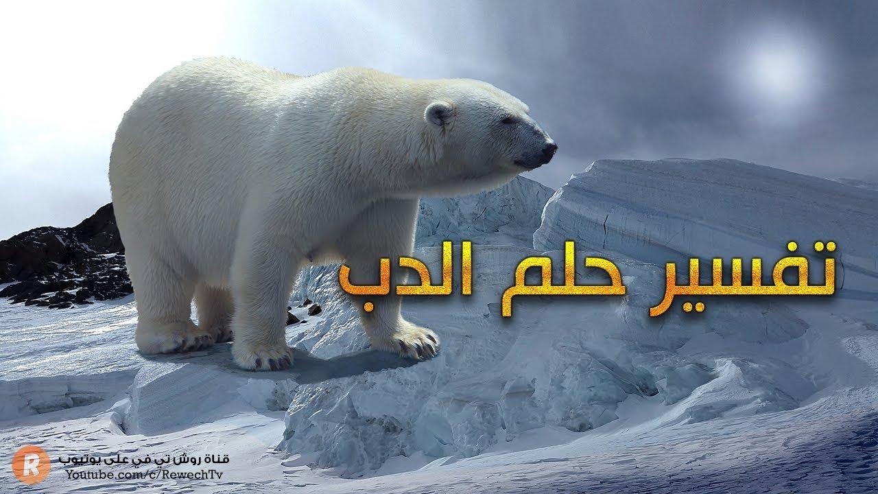 تفسير حلم الدب - ما معنى رؤية الدب في الحلم ؟ - سلسلة تفسير الأحلام