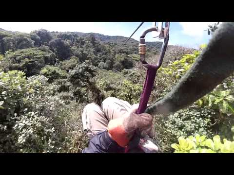 Ride cable over the Rain forest costa rica