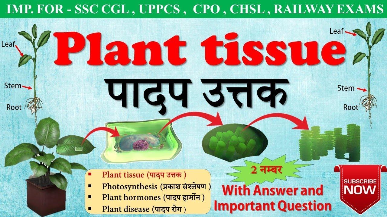 General Science Plant Tissue In Hindi प दप ऊतक Type