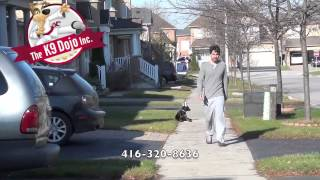 Executive Off Leash Dog Training Program Doberman Puppy