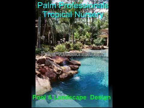 buy palm trees in houston for sale by palm professionals tropical nursery
