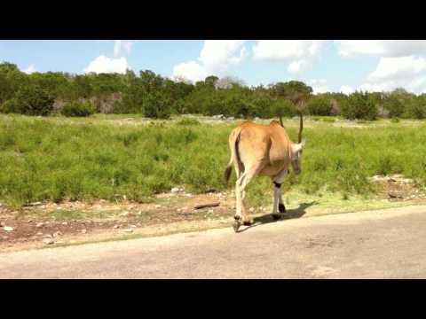 Natural Bridge Wildlife Ranch - Summer 2010 (HD)