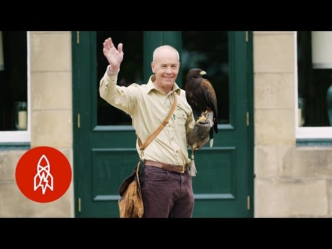 How Falconry Shaped the English Language