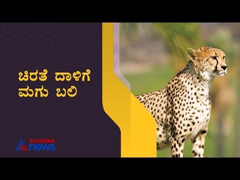 3 Year Baby Lost Life By The Attack Of Leopard At Tumkur