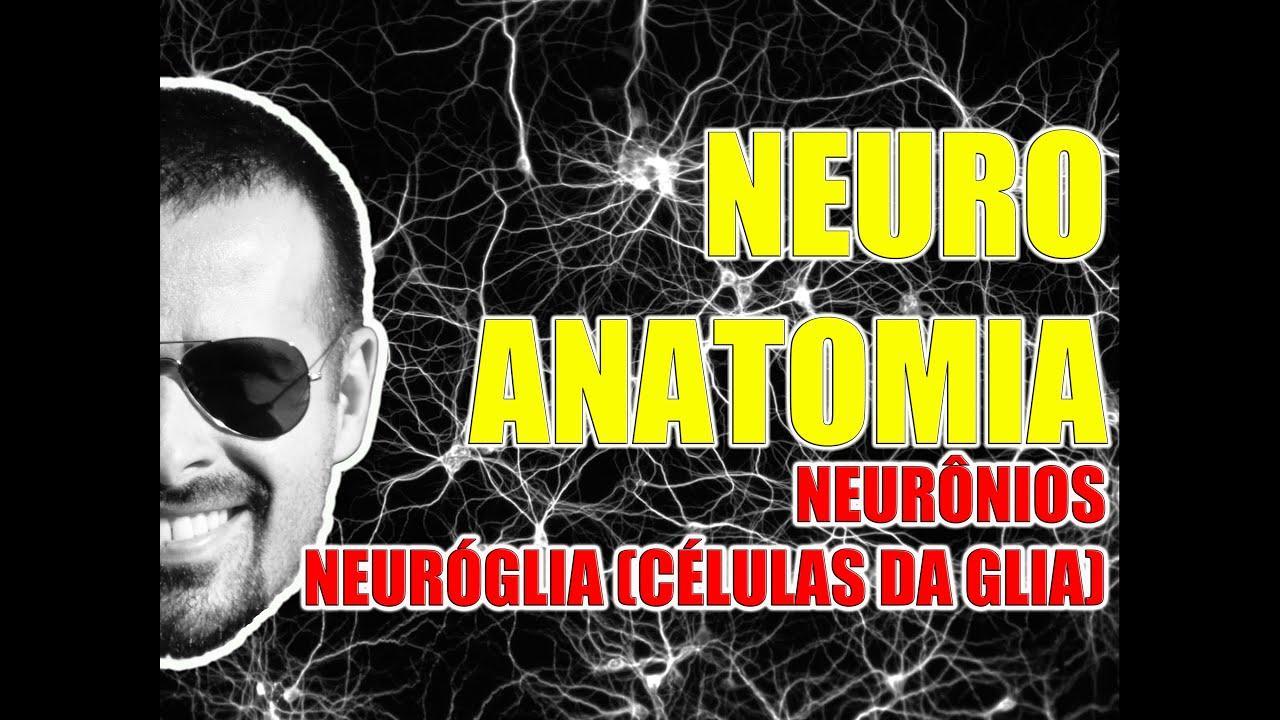 Neurônios E Células Da Glia Sistema Nervoso Neuroanatomia Videoaula 082