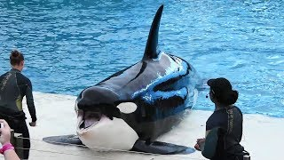 Orca Encounter Doesn