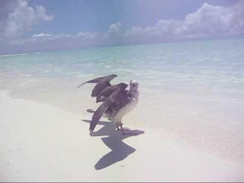 Clips from Kure Atoll - Underwater (Alibaba song, Karunesh)