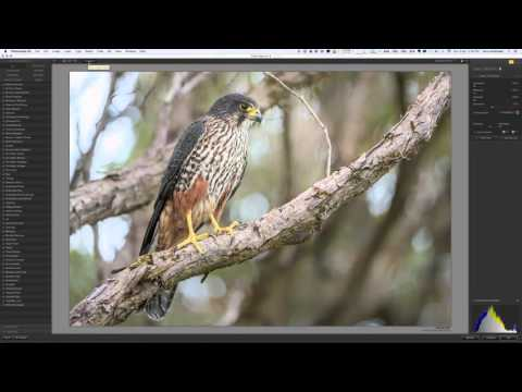 Using Nik Tonal Contrast to optimise wildlife images - VIDEO TUTORIAL