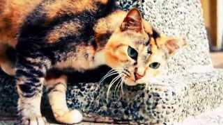 Cute Cat with Rare Fur Color in Asia