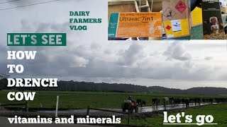 How to drench and inject minerals and vaccine to the cow's (farm vlog) pinoydairyfarmer in Australia