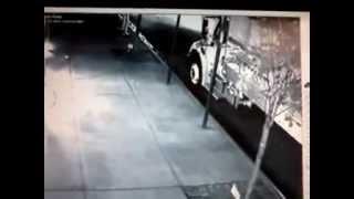 Footage Of Criminal Robbing My Male Shih Tzu Skylar 9/21/12