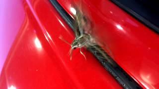 Moth Stuck in the Car Door!