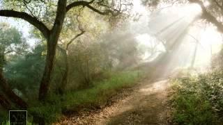 Звуки природы Утро в лесу