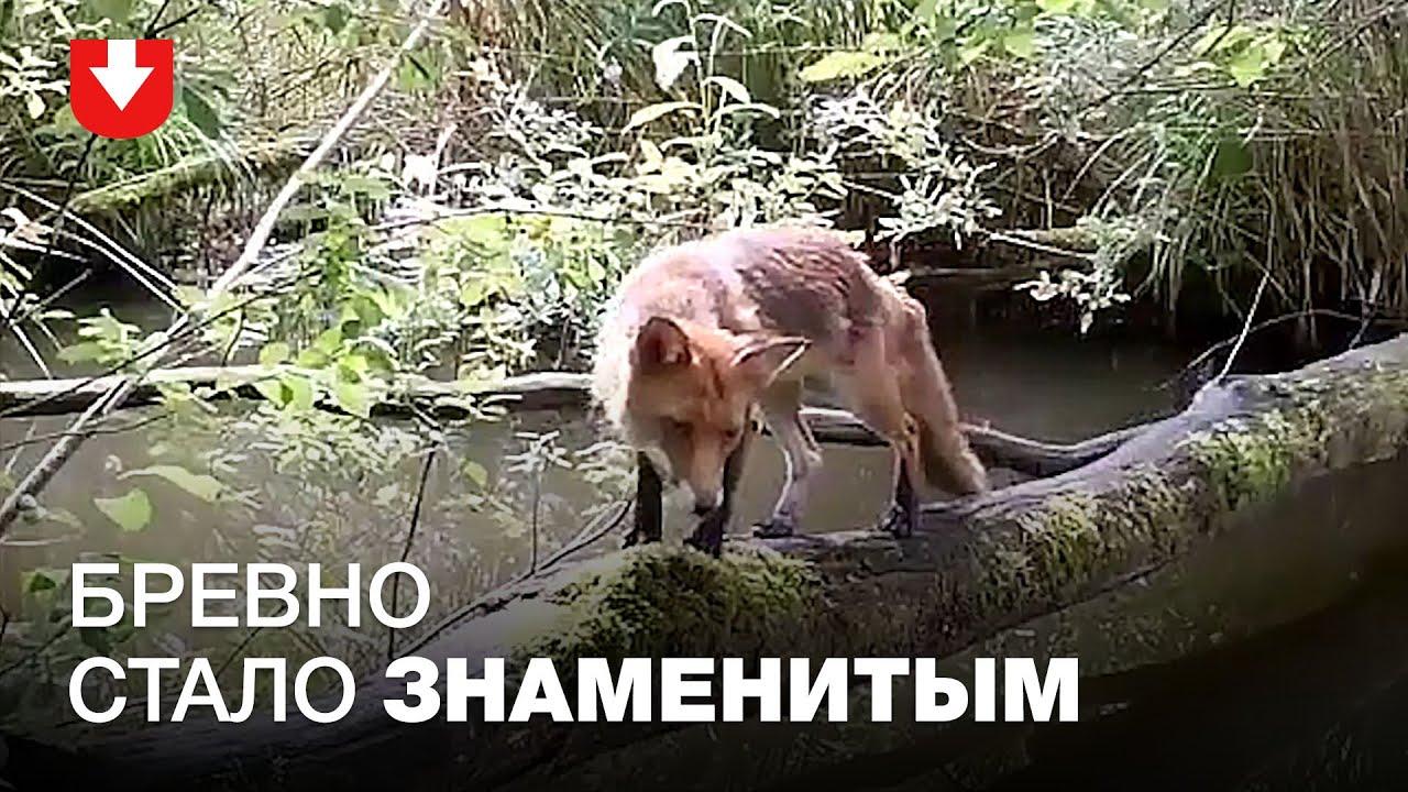Скрытая камера в лесу