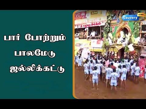 பார் போற்றும் பாலமேடு ஜல்லிக்கட்டு.....| #Jallikatu