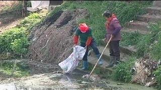 Китай: з річки виловили 12 тис. трупів свиней