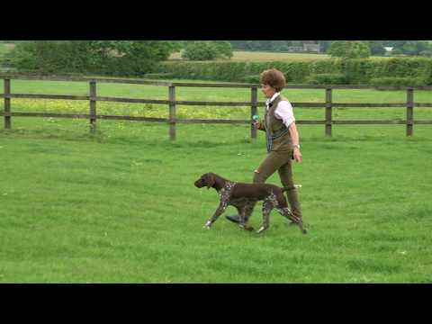 Training 9 month German shorthaired  Pointer simple seen & memory retrieves