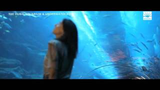 The Dubai Aquarium & Underwater zoo, Downtown Dubai